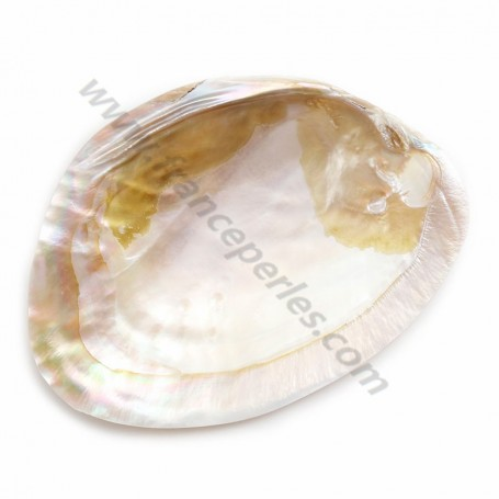 Shell with pearls included